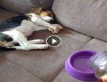 Uyuyan köpek yavrusunun yemek için verdiği tepki, istemsiz kahkaha sebebi oluyor. Yavru köpeğin yemeğe tepkisi videosu sayfamızda paylaşıldı.